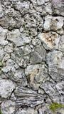 Παλαιός τοίχος κοραλλιών φιαγμένος από φραγμούς των διαφορετικών ειδών κοραλλιών Στοκ φωτογραφία με δικαίωμα ελεύθερης χρήσης