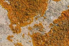 Παλαιός τοίχος με το βρύο στοκ εικόνα με δικαίωμα ελεύθερης χρήσης