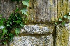 Παλαιός τοίχος πετρών με τον κισσό Στοκ φωτογραφία με δικαίωμα ελεύθερης χρήσης