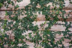 παλαιός τοίχος σύστασης τούβλου Στοκ Φωτογραφία