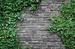 παλαιός τοίχος τούβλου Στοκ Φωτογραφίες