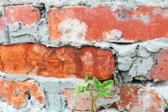 Παλαιός τοίχος τούβλων στενός Στοκ Εικόνες