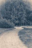παλαιός τρύγος φωτογραφ&i Δασικά οδικά δέντρα φύλλων πάρκων Στοκ Εικόνες