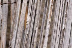 Παλαιός φράκτης καλάμων στοκ εικόνες