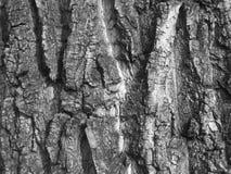 Παλαιός φλοιός γραπτός Στοκ Φωτογραφίες