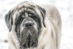 παλαιός χειμώνας ατόμων στοκ εικόνες