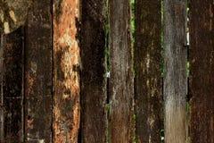 παλαιό δάσος ανασκόπησης Στοκ Φωτογραφία