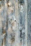 παλαιό δάσος ανασκόπησης Στοκ εικόνα με δικαίωμα ελεύθερης χρήσης