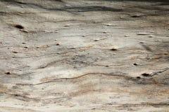 παλαιό δάσος ανασκόπησης Στοκ φωτογραφία με δικαίωμα ελεύθερης χρήσης