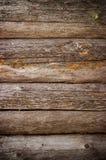 παλαιό δάσος σύστασης αν&alp Στοκ εικόνες με δικαίωμα ελεύθερης χρήσης