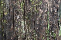 παλαιό δάσος σύστασης Στοκ φωτογραφία με δικαίωμα ελεύθερης χρήσης