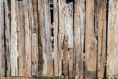 παλαιό δάσος τοίχων Στοκ Εικόνα