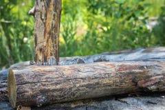 παλαιό δάσος Στοκ Εικόνες