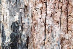 παλαιό δάσος Στοκ Εικόνα