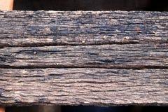 παλαιό δάσος Στοκ φωτογραφία με δικαίωμα ελεύθερης χρήσης