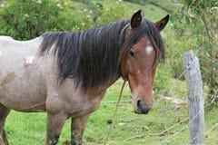 Παλαιό άλογο Στοκ Φωτογραφίες