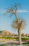 παλαιό δέντρο ερήμων Στοκ φωτογραφίες με δικαίωμα ελεύθερης χρήσης