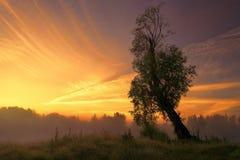 Παλαιό δέντρο ιτιών στην ανατολή Στοκ Φωτογραφίες
