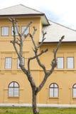 Παλαιό δέντρο και παλαιό κτήριο Στοκ φωτογραφίες με δικαίωμα ελεύθερης χρήσης