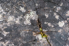 παλαιό δέντρο κολοβωμάτω& στοκ εικόνες