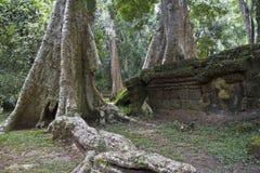 Παλαιό δέντρο με τις μεγάλες ρίζες σε Angkor Wat Στοκ φωτογραφίες με δικαίωμα ελεύθερης χρήσης