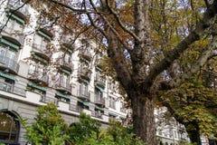 Παλαιό δέντρο με τους μεγάλους κλάδους Στοκ εικόνες με δικαίωμα ελεύθερης χρήσης