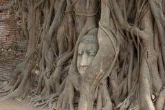 Παλαιό δέντρο με το κεφάλι του Βούδα Στοκ εικόνες με δικαίωμα ελεύθερης χρήσης