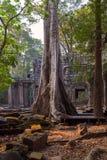 Παλαιό δέντρο σε Angkor Wat Καμπότζη Στοκ Εικόνες
