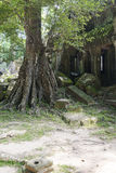 Παλαιό δέντρο στις καταστροφές Στοκ Εικόνες