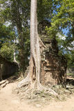 Παλαιό δέντρο στις καταστροφές Στοκ φωτογραφίες με δικαίωμα ελεύθερης χρήσης