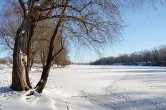 Παλαιό δέντρο στις όχθεις του ποταμού χιονιού Στοκ Φωτογραφίες