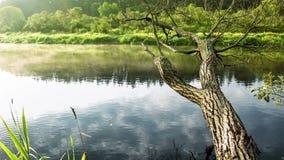 Παλαιό δέντρο στον ποταμό απόθεμα βίντεο