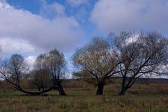 Παλαιό δέντρο στον τομέα Στοκ φωτογραφία με δικαίωμα ελεύθερης χρήσης