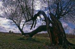 Παλαιό δέντρο στον τομέα Στοκ Φωτογραφία