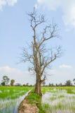 Παλαιό δέντρο στον όρο φθινοπώρου χωρίς τα φύλλα Στοκ Φωτογραφία