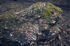 παλαιό δέντρο σύστασης λευκών φλοιών Κορμός δέντρων παλαιός ξύλινος ανασκόπη&sigm Λεπτομέρεια κορμών Στοκ φωτογραφίες με δικαίωμα ελεύθερης χρήσης