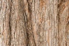 παλαιό δέντρο σύστασης λευκών φλοιών Ξύλινο υπόβαθρο φύσης Στοκ φωτογραφία με δικαίωμα ελεύθερης χρήσης