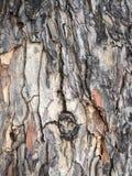 παλαιό δέντρο σύστασης λευκών φλοιών Tracery από το ξύλο φύσης Στοκ εικόνα με δικαίωμα ελεύθερης χρήσης