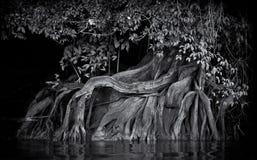 παλαιό δέντρο στοκ εικόνες