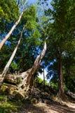 Παλαιό δέντρο Banyan Beng Mealea Στοκ φωτογραφία με δικαίωμα ελεύθερης χρήσης