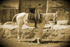 Παλαιό αραβικό άλογο ύφους Στοκ φωτογραφία με δικαίωμα ελεύθερης χρήσης