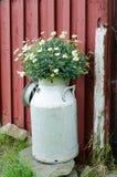 Παλαιό γάλα juge Στοκ Φωτογραφία