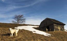 Παλαιό εγκαταλειμμένο σπίτι με τα σκυλιά Στοκ Φωτογραφίες