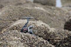 Παλαιό εξέλικτρο αλιείας στην παραλία πετρών Στοκ φωτογραφίες με δικαίωμα ελεύθερης χρήσης