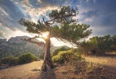 παλαιό θερινό δέντρο τοπίων Στοκ εικόνες με δικαίωμα ελεύθερης χρήσης