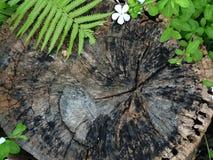 Παλαιό διαστημικό πλαίσιο αντιγράφων λουλουδιών φτερών υποβάθρου σύστασης κολοβωμάτων ρωγμών ξύλινο Στοκ φωτογραφία με δικαίωμα ελεύθερης χρήσης