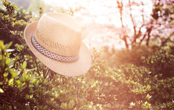 Παλαιό καπέλο αχύρου ενάντια συνημμένος σε εγκαταστάσεις μέσα Στοκ Φωτογραφίες