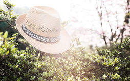 Παλαιό καπέλο αχύρου ενάντια συνημμένος σε εγκαταστάσεις μέσα Στοκ Εικόνα