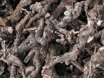 Παλαιό καυσόξυλο αμπέλων Cutup Στοκ Φωτογραφίες
