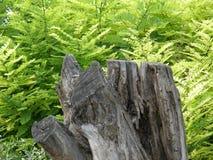 Παλαιό κολόβωμα δέντρων στα ξύλα Στοκ εικόνα με δικαίωμα ελεύθερης χρήσης